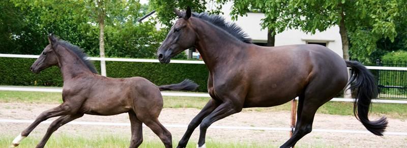 Pferde im Blickpunkt