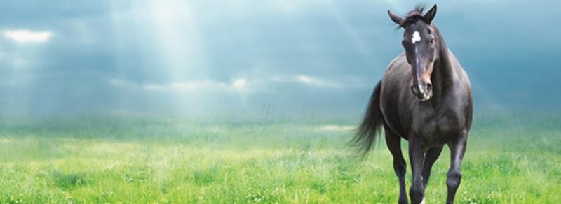 7-Tage Darmkur für Pferde