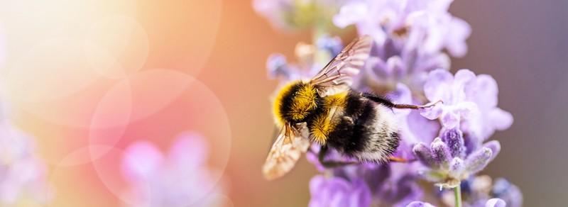 EM für Bienen