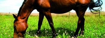 EM für Pferde