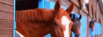 Pferde in der Umstellungsphase