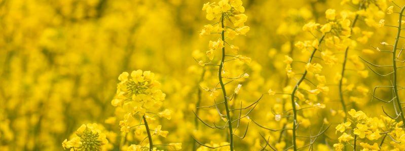 Regenerative Landwirtschaft