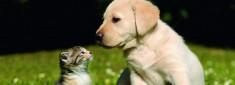 EM für Hunde & Katzen